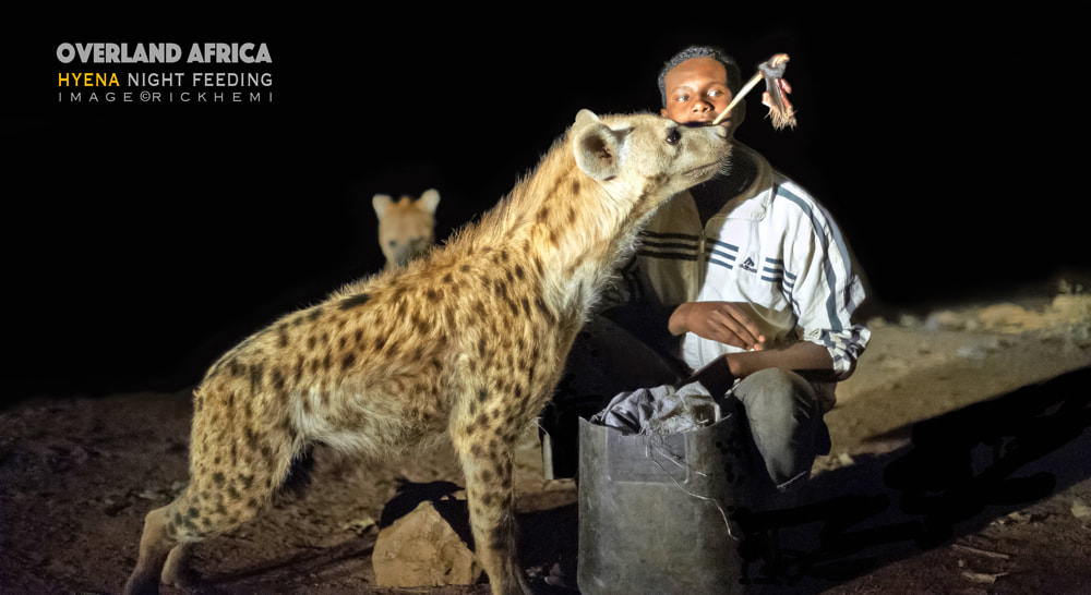 travel and transit Africa, solo travel Africa, hyena night feeding image by Rick Hemi
