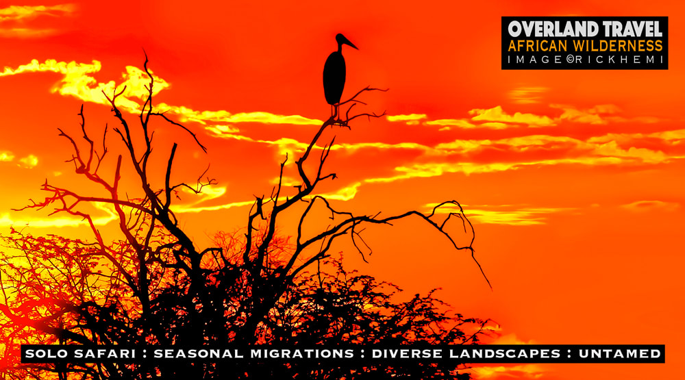 overland travel Africa, marabou silhouette image by Rick Hemi