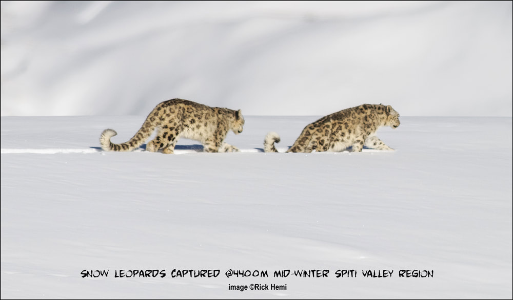 overland travel photography through Asia, wildlife photography Asia, self tracking & spotting snow leopards, extreme wildlife travel during mid-winter season in Asia