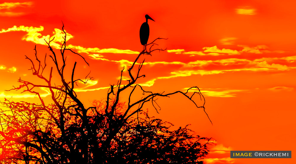 solo overland travel, savannah silhouette, image by Rick Hemi