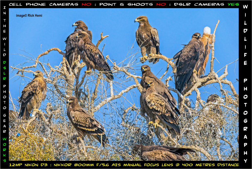solo overland travel wildlife photography with DSLR camera gear works, Nikon D3 12MP body & manual focus lens capturing eagles in 2020